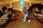 У молочной отрасли России высокий потенциал. Но…